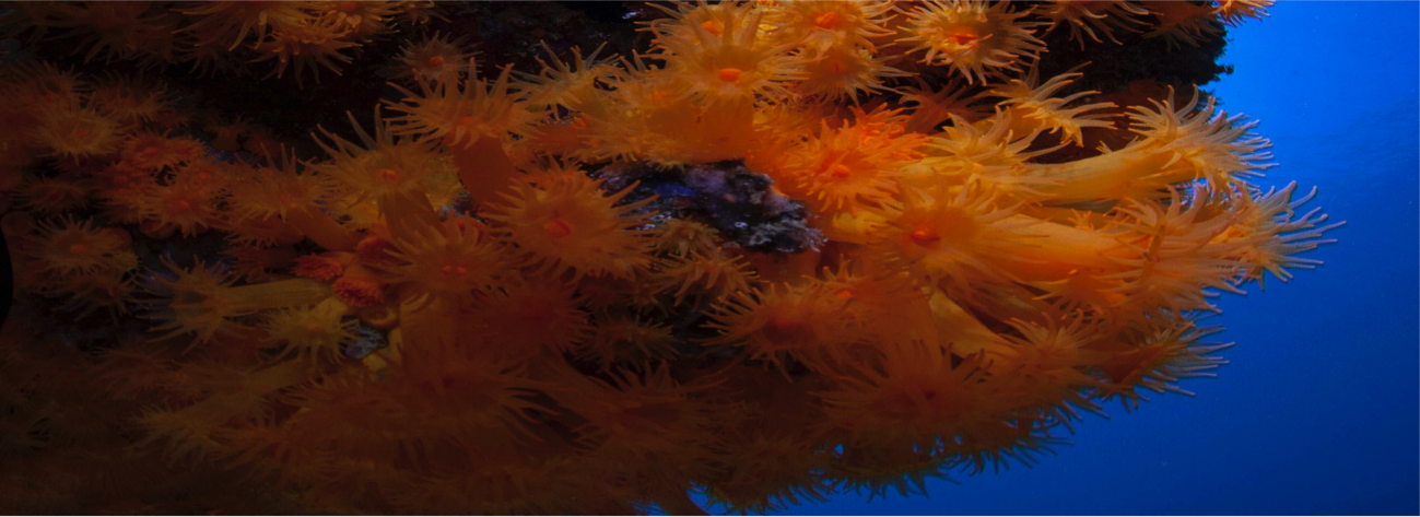Asociación de Oceanógrafos de Andalucía